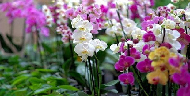 Pembagian Flora di Indonesia