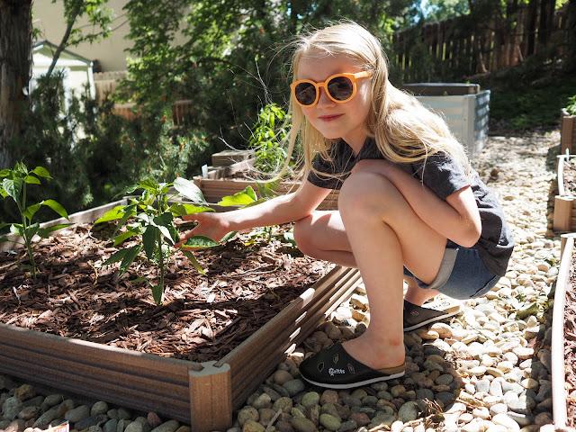Lola in veggie garden