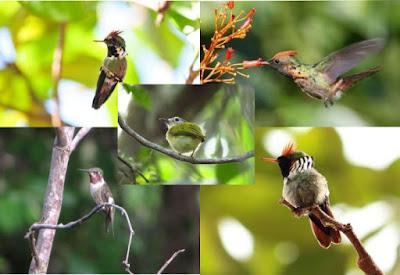 por que devemos preservar os pássaros, por que devemos preservar as aves, não caçar os pássaros, aves, birds, natureza, ornitologia, biologia, meio ambiente