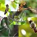 Descubra 6 motivos pelos quais precisamos das aves