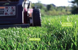 Lawn Mowing As Weed Control