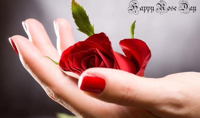 rose day reddit image