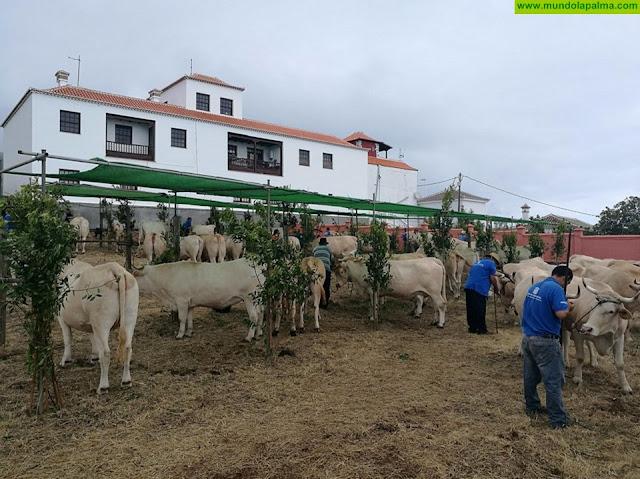 Puntallana celebra su XIV Feria de Ganado