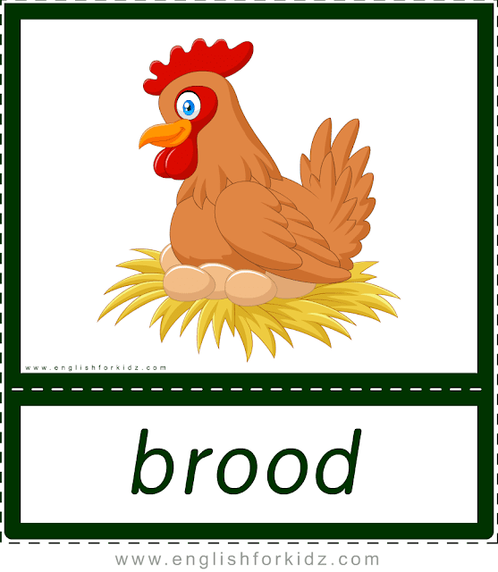 Brood (hen, chicken) - printable animal actions flashcards for English learners