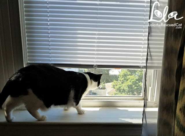 5 ways to keep your cat cool