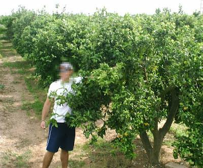 Lyxliv på Apelsinblomskusten