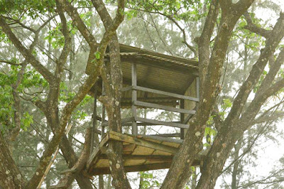 Zinda Park Tree house
