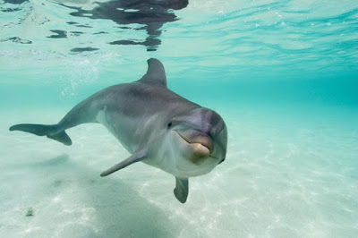 Figure: Name this smart looking marine creature