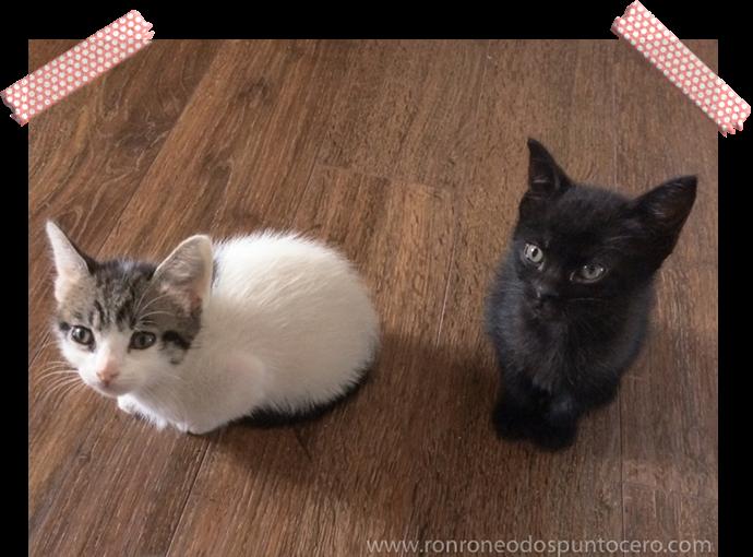 Una vida con tres gatos - Hilda y Brizna