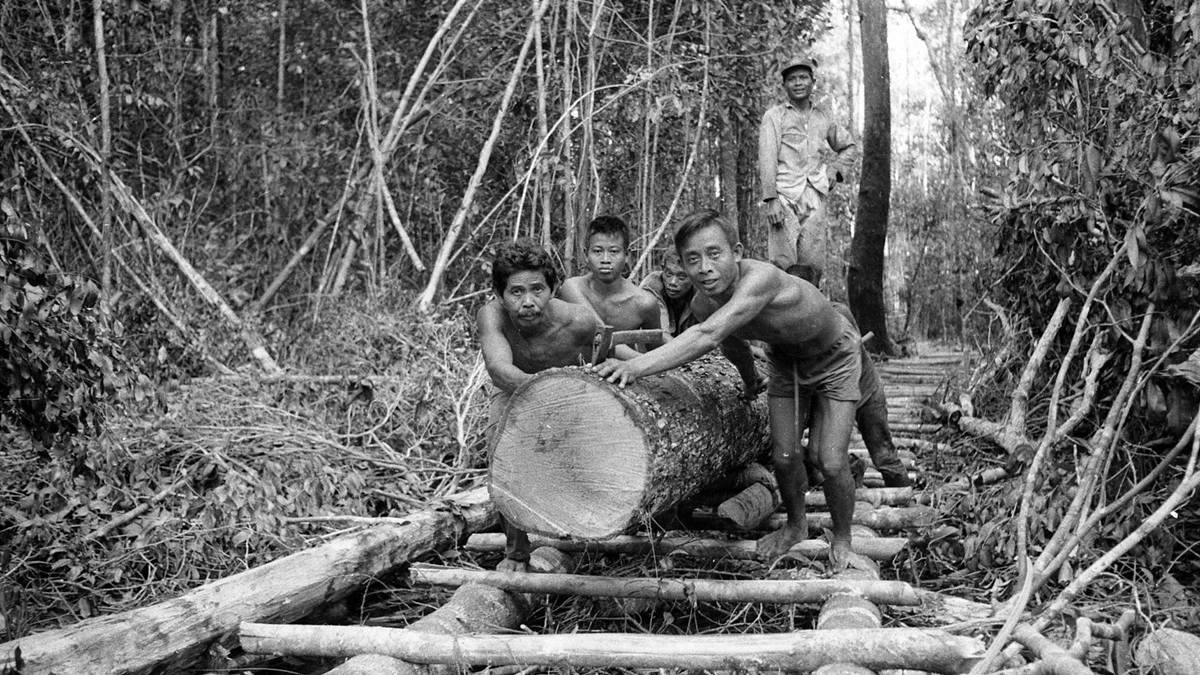 penebangan kayu di Kalteng tahun 1975