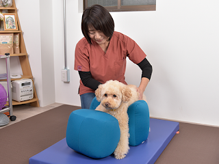 tratamento de lesões em cães