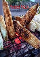 roasted maize