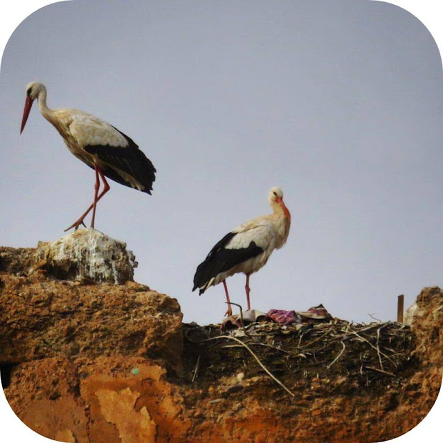 Long Weekend in Marrakech - Sidewalk Safari - Storks