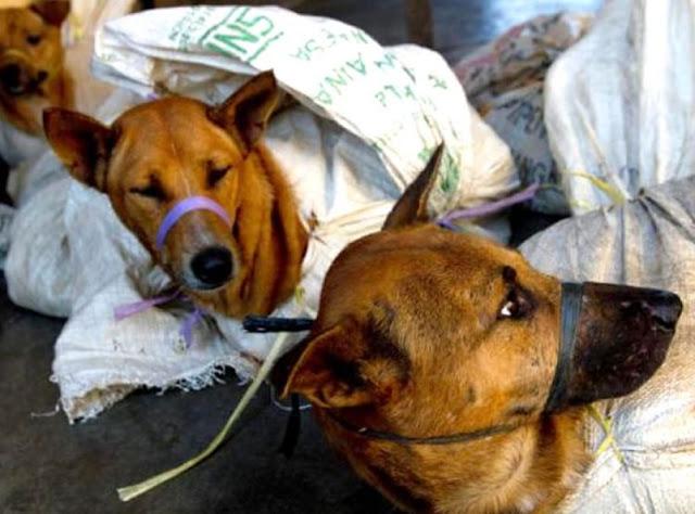 भारत के इन राज्यों में जमकर खाया जाता है कुत्तों का मांस, हर साल कटते हैं 30 हजार कुत्ते