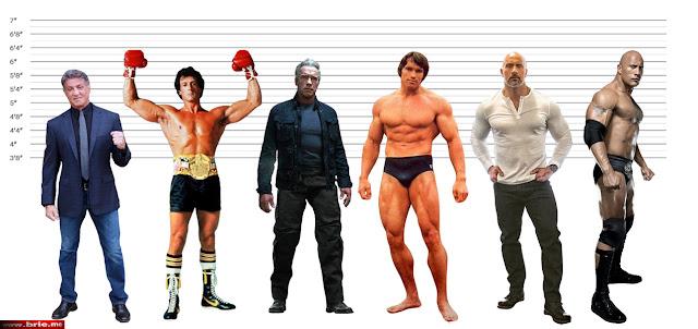Sylvester Stallone, Arnold Schwarzenegger, The Rock height comparison