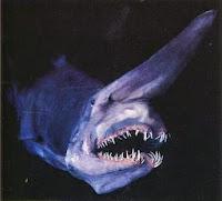 Resultado de imagen de tiburón duende rosado
