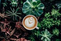 beautiful botanical coffee