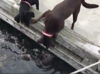 Adorable Video Of Dogs Befriending An Otter Will Brighten Your Entire Day