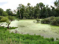 Yuk Menjelajah Bioma Perairan_Ekosistem Lahan Basah