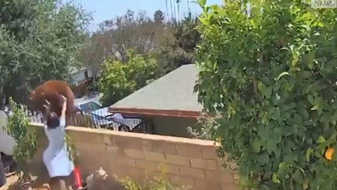 Lelökte a medvét a kerítésről a 17 éves lány