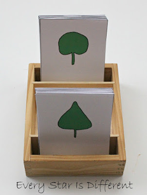 Leaf types nomenclature cards (free printable).