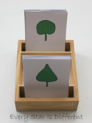 Leaf types nomenclature cards (free printable).