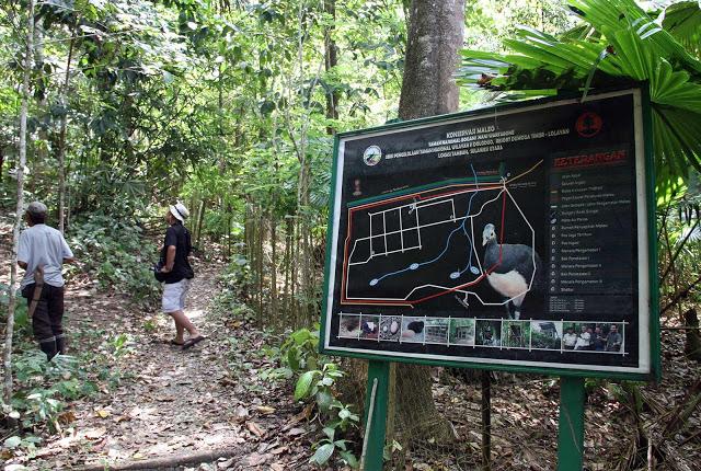 Aktivitas illegal logging ancam kelestarian Taman Nasional Bogani Nani Wartabone