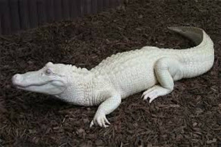 Beberapa Hewan langka Berwarna Putih