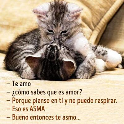 Te amo, cómo sabes que es amor?, porque pienso en ti y no puedo respirar, eso es asma, bueno, entonces te asmo
