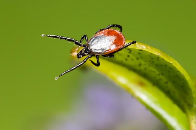 California beaches: Is Lyme Disease