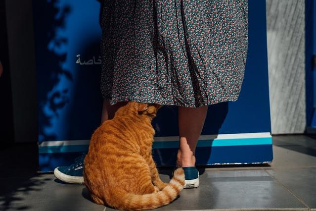the happy cats, happy cats, happy feline, banana cat bed, happy cat, happy cats, happy cats 4 you, happy cats for you, pet cute animal,