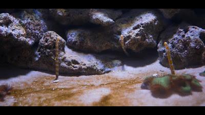 Muséum-Aquarium de Nancy: Musée d'histoire naturelle
