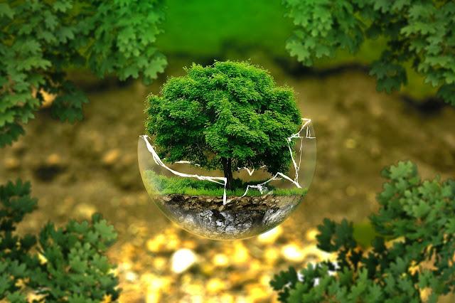 أجمل خلفيات الاشجار والطبيعة