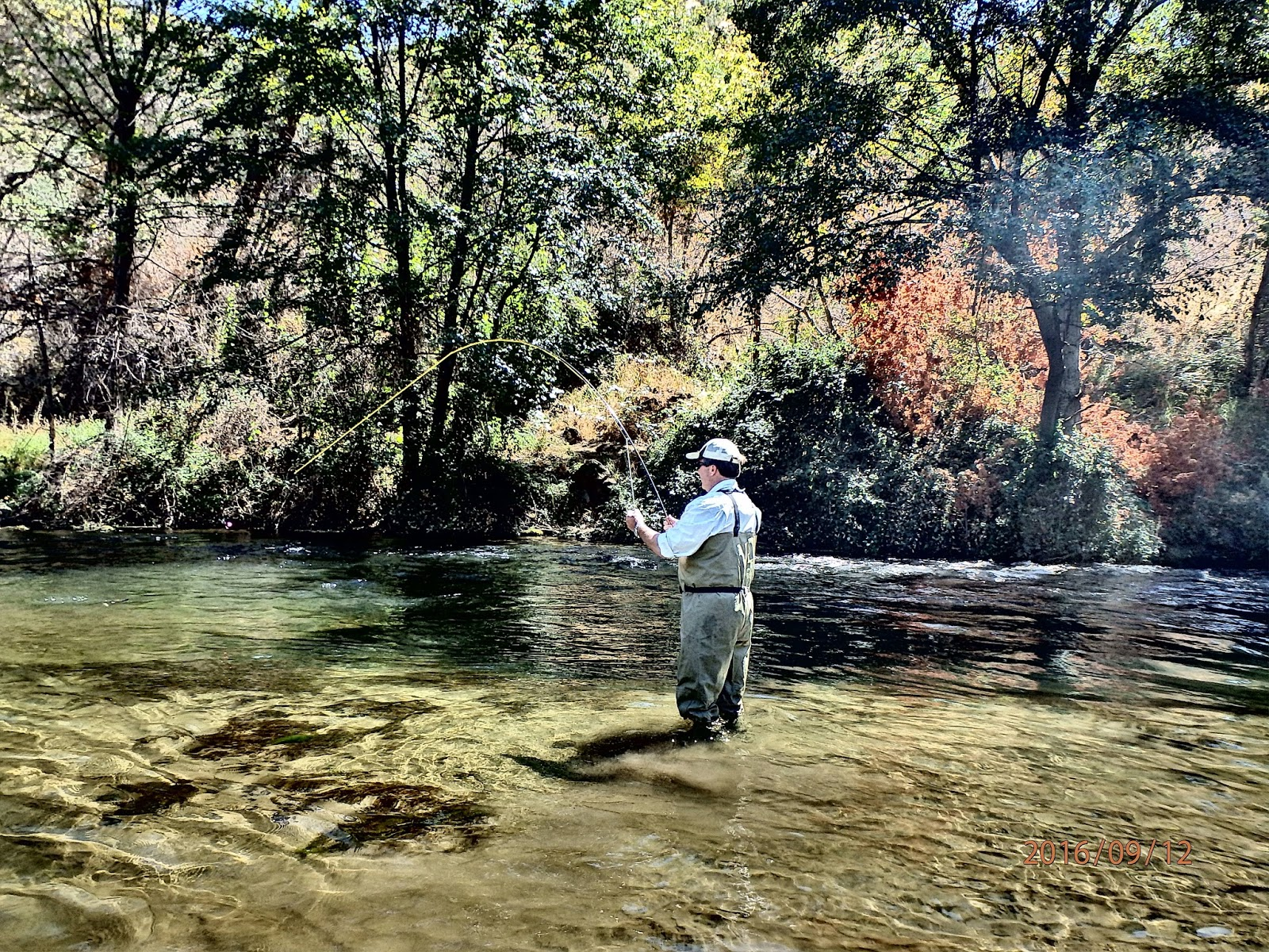 Napa valley fly fishing guide richard loft for Napa river fishing
