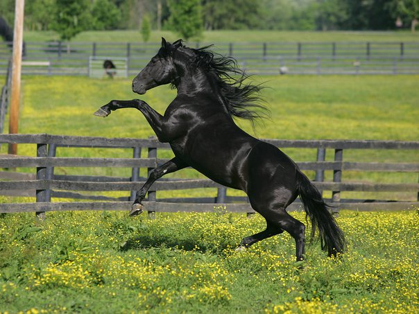 All About Horses ألوان الخيل