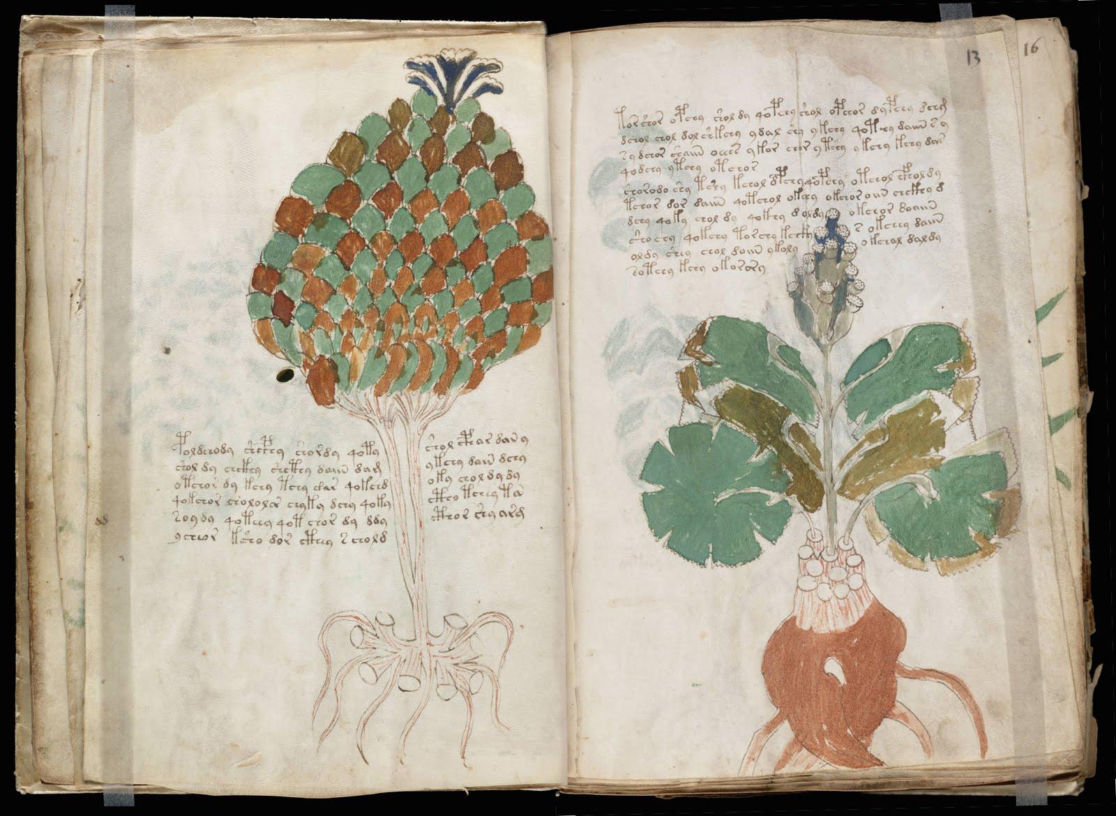 A B I T A Voynich Manuskrip