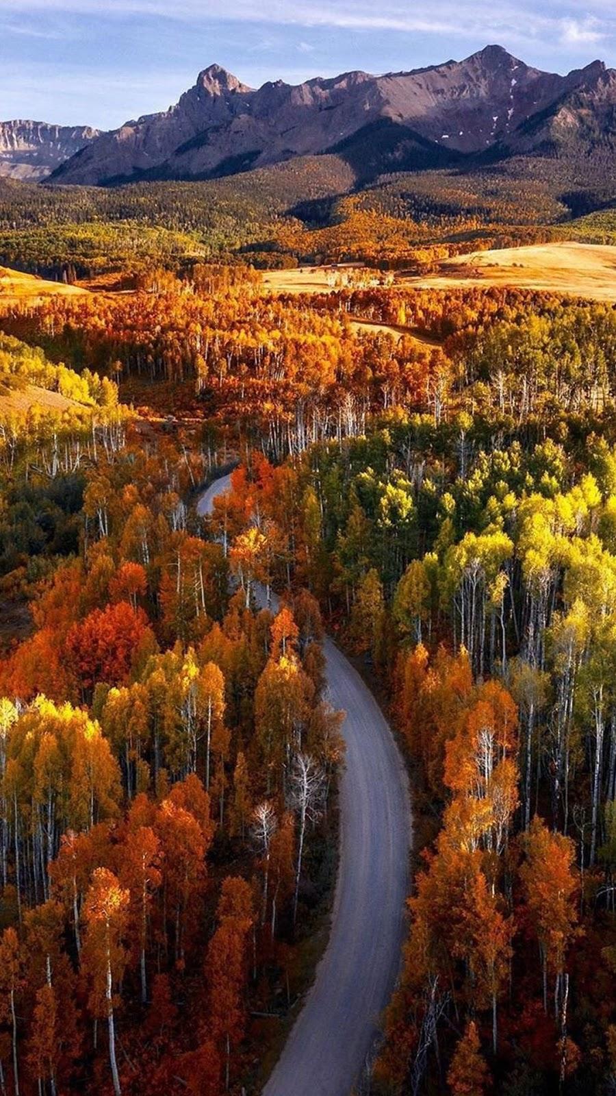 A road through the wilderness of Colorado