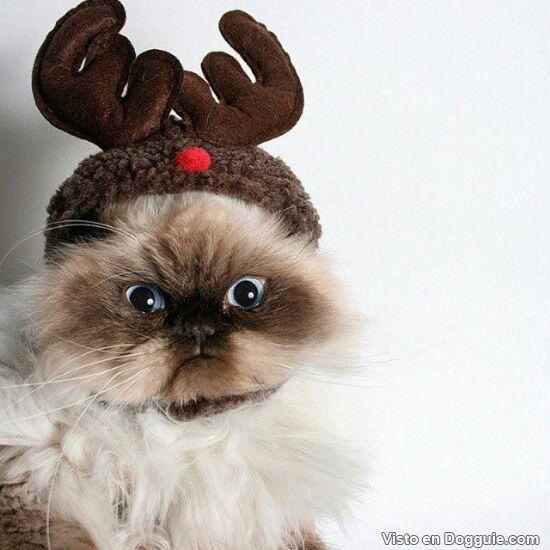 gato con cuernos de reno