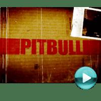 """Pitbull - naciśnij play, aby otworzyć stronę z odcinkami serialu """"Pitbull"""" (odcinki online za darmo)"""