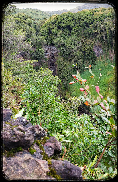Ravine along the side of the Pipiwai Trail Maui Hawaii
