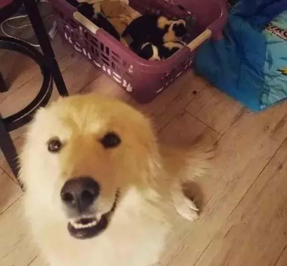 Cái kết đẹp cho chó mẹ sau khi mất 7 đứa con do hỏa hoạn