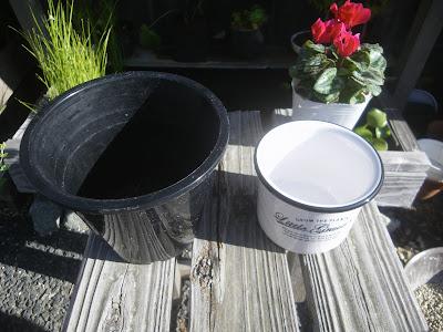 鉢の大きさ 比べる