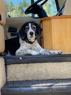 Our motorhome dog