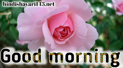 Good morning images for WhatsApp HD free download