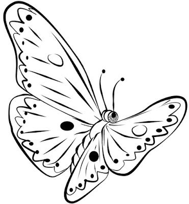 Sketsa kupu kupu mudah dan indah
