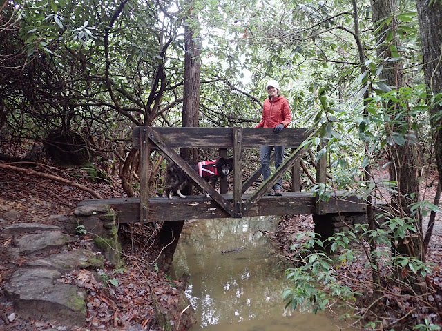 woman and dog on bridge in forest