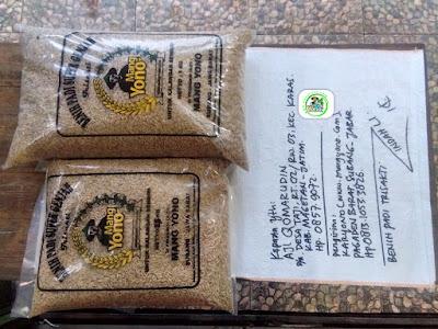 Benih padi yang dibeli AJI QOMARUDIN Magetan, Jatim. (Sebelum packing karung ).