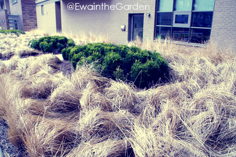 Landscaping With Evergreens And Grasses : Ewa in the garden landscaping with grasses unusual spring