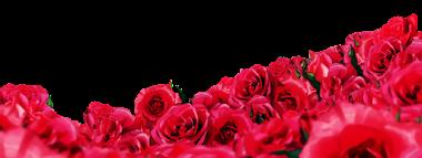 png rosas