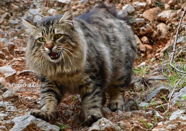 Η φωτογραφία της ημέρας: Η γάτα